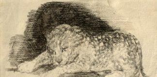 Dibujos de Rosario Weiss en la Biblioteca Nacional