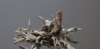 Arbóreo en el Museo de Ciencias Naturales
