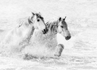 los-unicornios-existen-exposicon