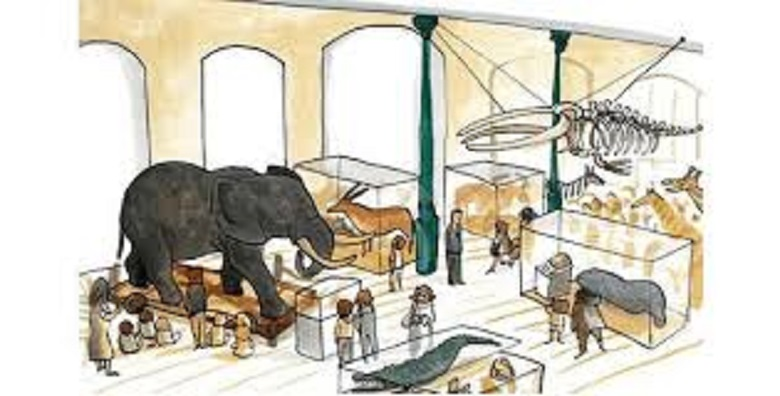 El elefante del Museo por Ximena Maier