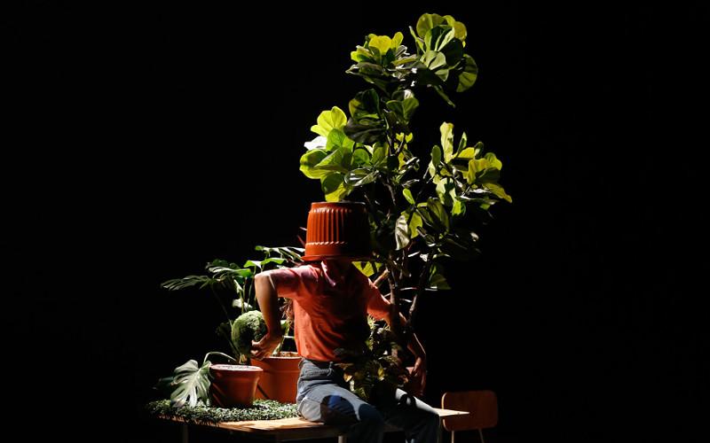 estado vegetal teatro