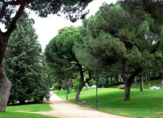 parque del oeste flyer