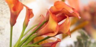 madrid florece