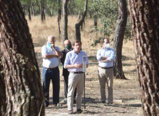 Replantación de árboles para paliar los daños de Filomena